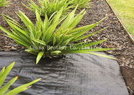 Polypropylene Plantex Ground Weed Control Fabric Moisture Proof 60gsm Black Color