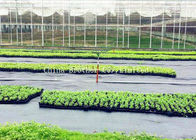 Customized 80gsm Black Weed Control Membrane PP Woven For Agriculture