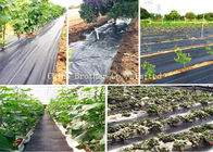 Polypropylene Woven Ground Weed Control Fabric Air Permeable Black Color